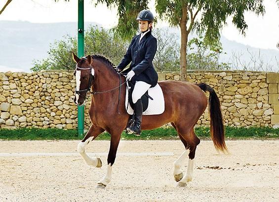 let's-go-horseback-riding-2_041941.jpg.ashx