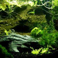 Top 3 Plants For Your Aquarium