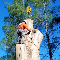 How To Hire a Good Tree Lopping Company?