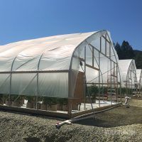 What Are The Points To Keep In Mind While Buying Halls Greenhouse?