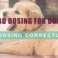 The Dosage Of CBD For Dogs